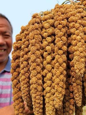 青龙特产:当地美食杏仁粥的做法